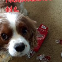 The Truth About Dogs and Chocolate Toxicity